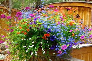 colorful planter